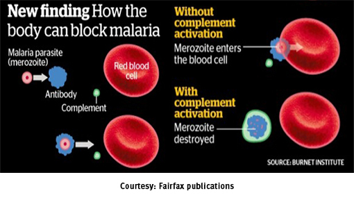 news-malaria-breakthrough-510-x-288