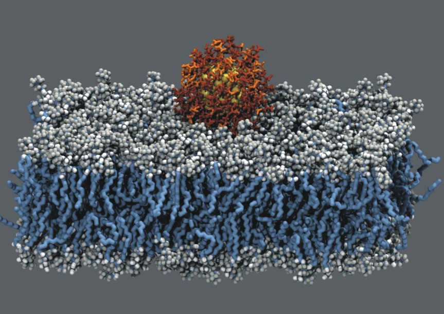 goldNanoparticleBilayer.jpg