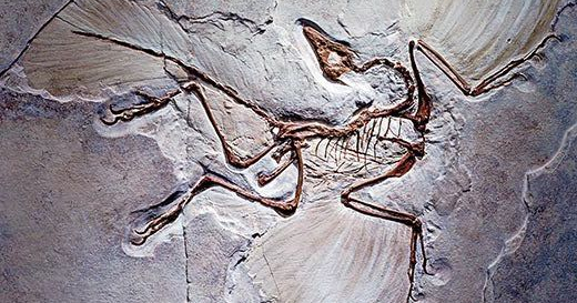 5/15/18 Show feat. Paleontologist EvanSaitta